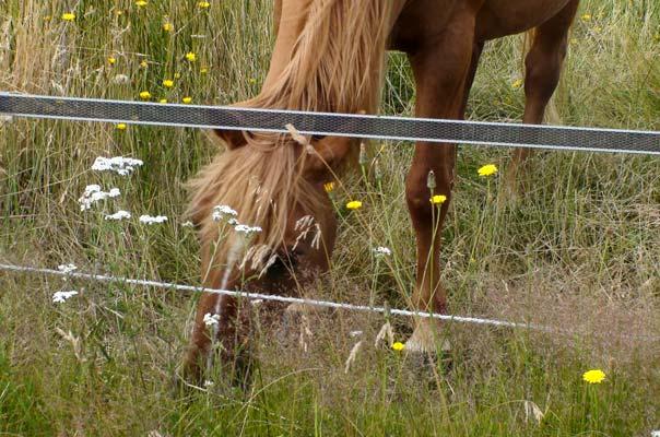 Die Kindertagespflege besucht die Pferdeweide  ? TiQ! Tagespflege in Querum Nicole Appel und Antje Storek, Kindertagespflege Tagesmutter Großtagespflege Braunschweig Querum